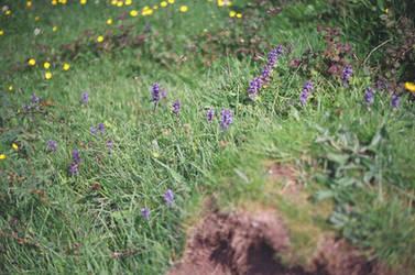 Prior Park Landscape Garden: Flowers, I by neuroplasticcreative