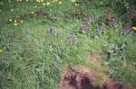 Prior Park Landscape Garden: Flowers, I