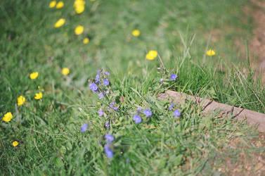 Prior Park Landscape Garden: Flowers, II by neuroplasticcreative