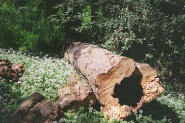 Prior Park Landscape Garden: Fallen, II by neuroplasticcreative