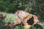 Prior Park Landscape Garden: Fallen, II