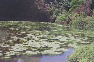 Prior Park Landscape Garden: Float, I by neuroplasticcreative