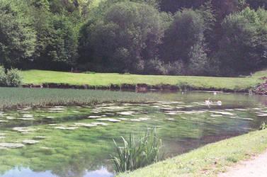 Prior Park Landscape Garden: Peace by neuroplasticcreative