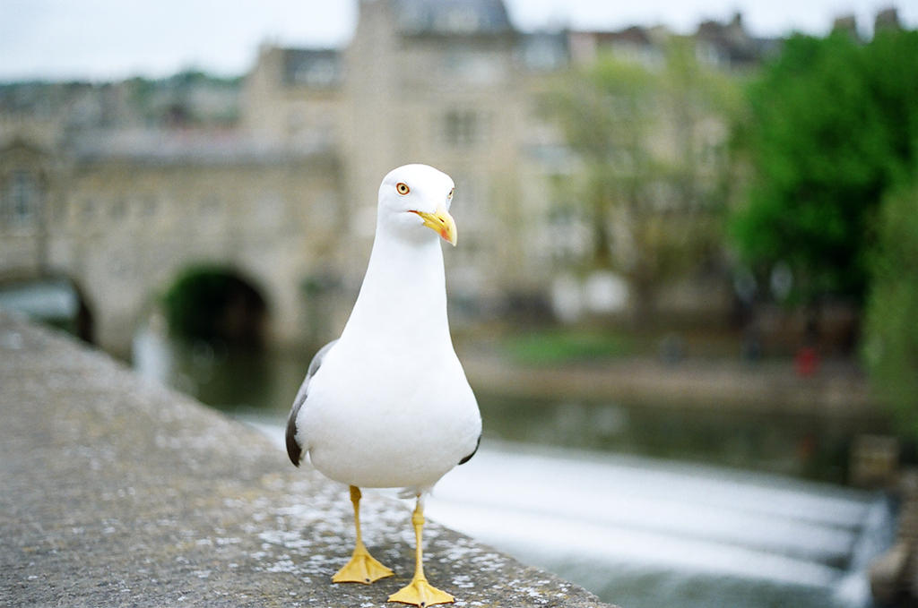 Bath: Just a walk, I by neuroplasticcreative