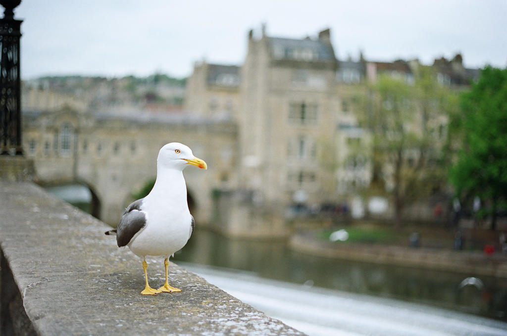 Bath: Just a walk, II by neuroplasticcreative