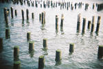 Brooklyn in Color: Sticks 'n' Stones, I