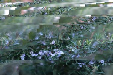 Vaporous Lacuna