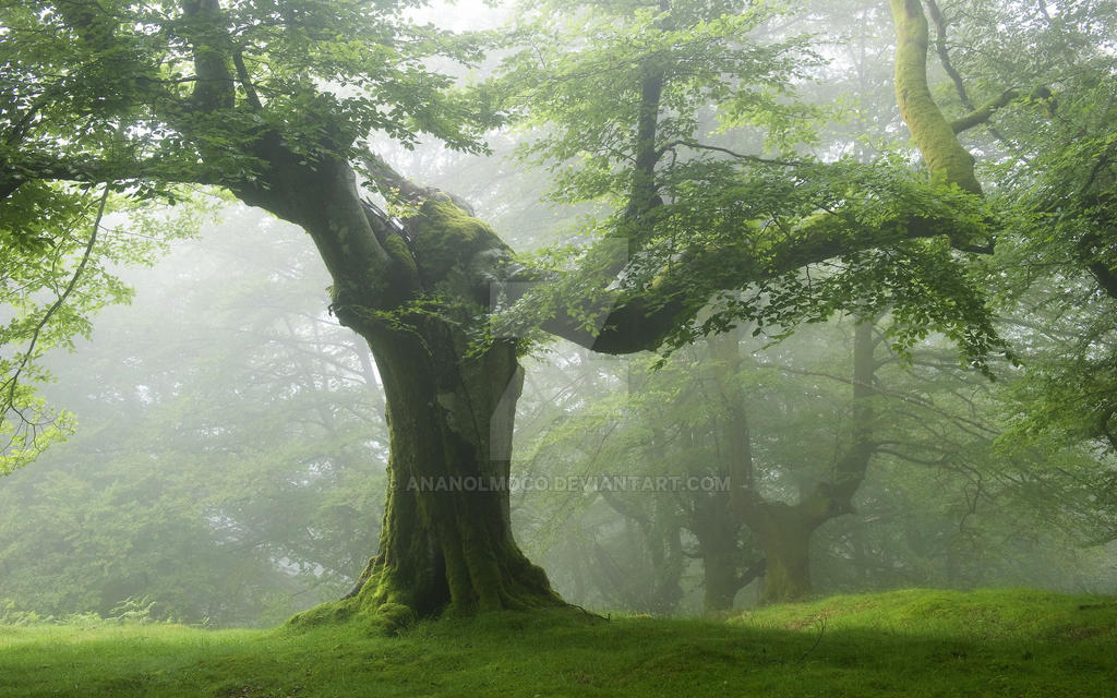 lo rewilding trees forests - HD1152×864