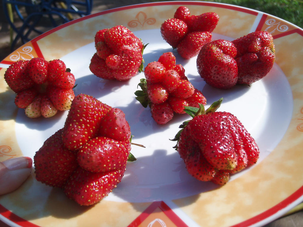 very deformed strawberries by justxlikexyou
