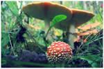 Mushroom-trip