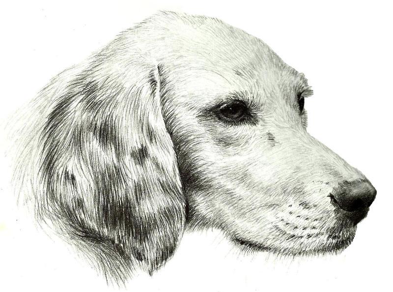 Dog Giving Itself Head