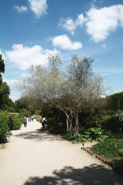 Jardin des plantes paris 2015 by eleanor r on deviantart for Jardins paris 2015