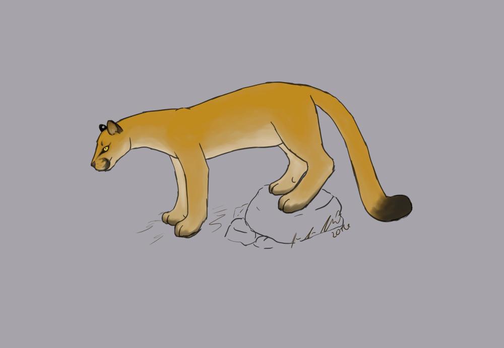 Cougar by jennovazombie
