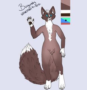 Burgundy whitemark fox adoptable