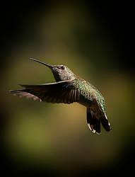 Humming Bird by prologic77