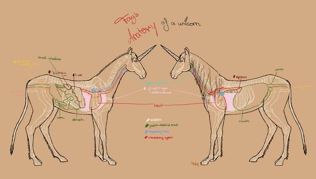 Unicorn anatomy situs