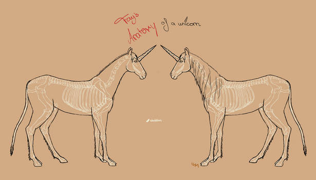 Unicorn anatomy skeleton + lines