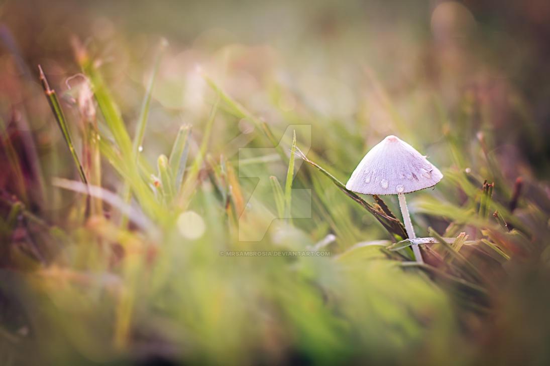 Morning Mushroom by MrsAmbrosia