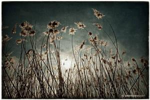 Weeds by nahojsennah