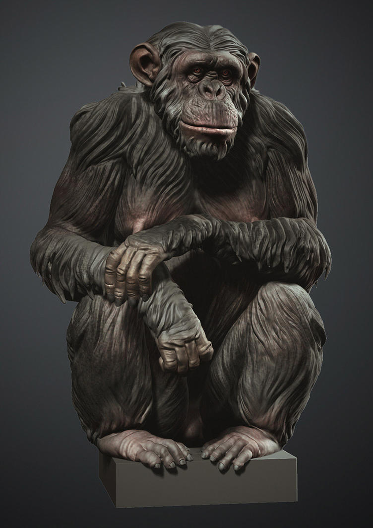 Chimp Final Web by mmodarres