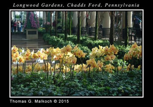 longwood feb 2015 DSC 0056