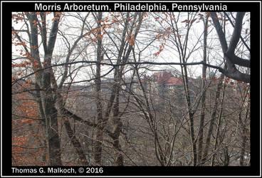 Morris Arboretum Image73