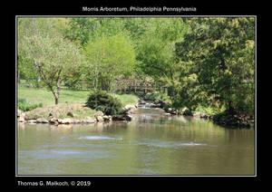 Morris Arboretum Pond
