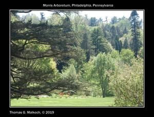 Morris Arboretum Lanscape