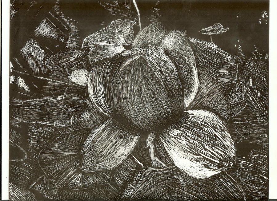 Scratchboard Water Lily by DefyingIndecision