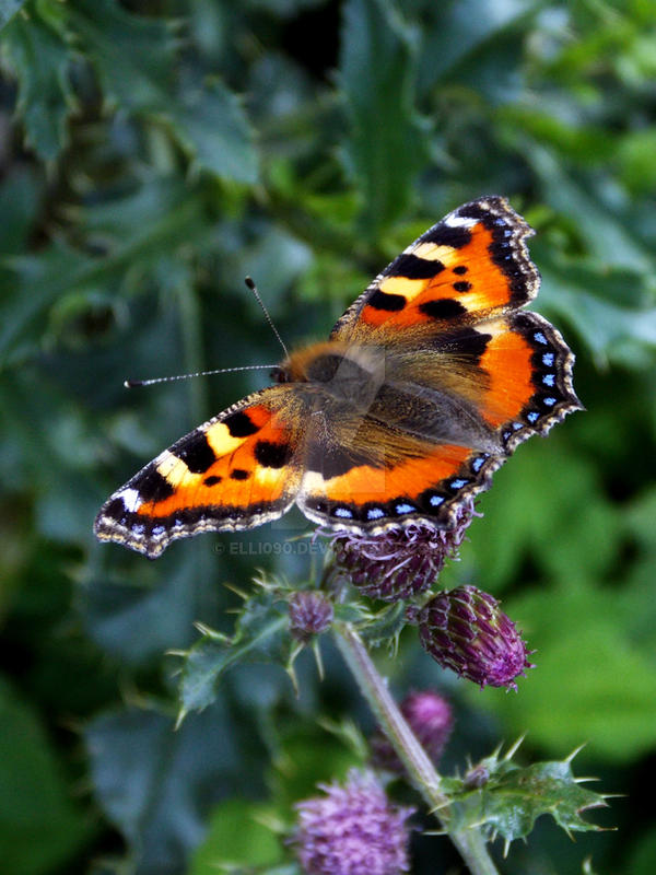 Butterfly I by Elli090