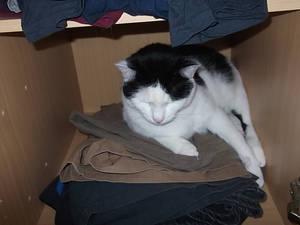 Charly in my wardrobe
