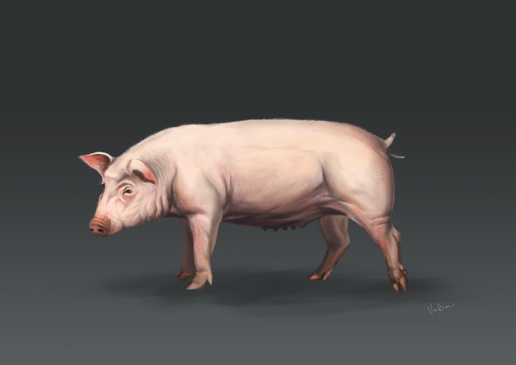 Pig by VuBui91