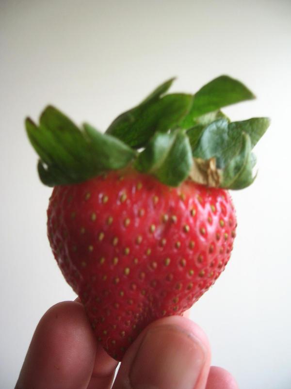 Berry Big by SilensTemplum