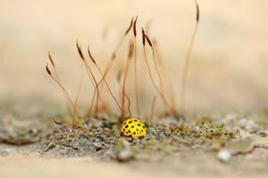 Beetle by tarqDZ