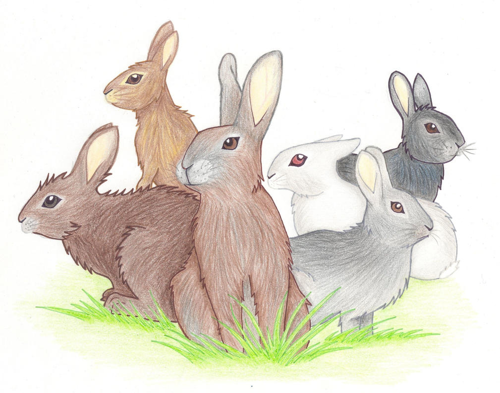 Watership Down - The six brave main characters by GammaLykos