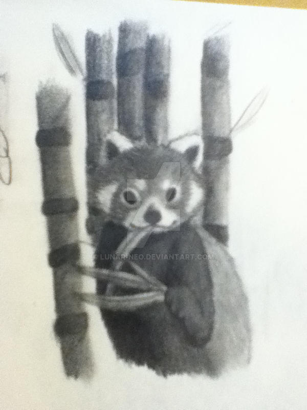 Red Panda by lunar-neo