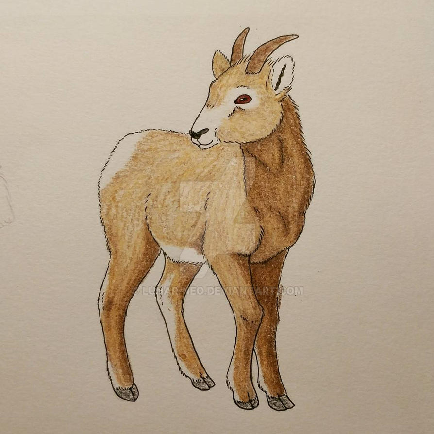 Bighorn Sheep by lunar-neo