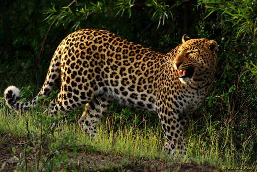 Pilanesberg Beauties