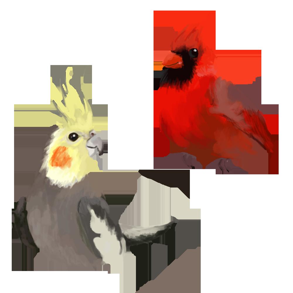 Birds by MugiwaraWolf