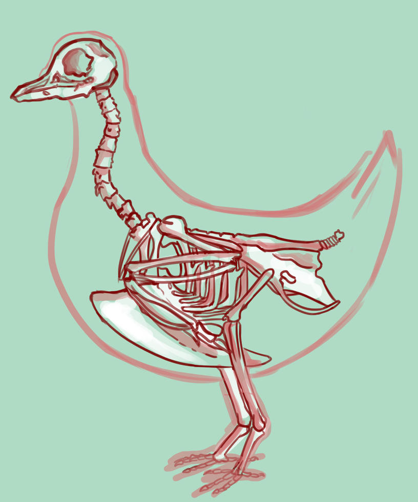 bird by MugiwaraWolf