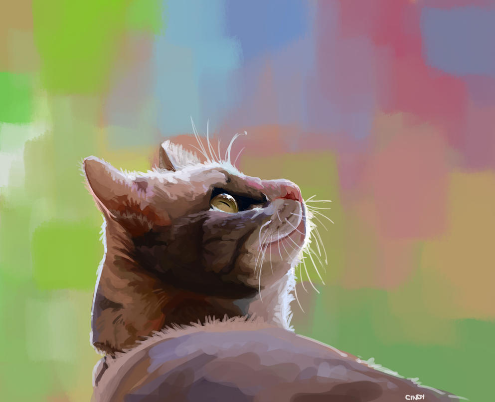 cat by MugiwaraWolf