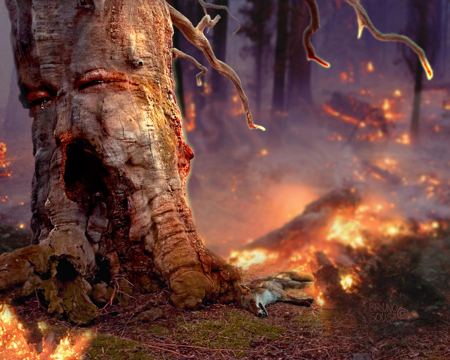 FIRE.The Pain Of Nature By Bruno-sousa On DeviantArt
