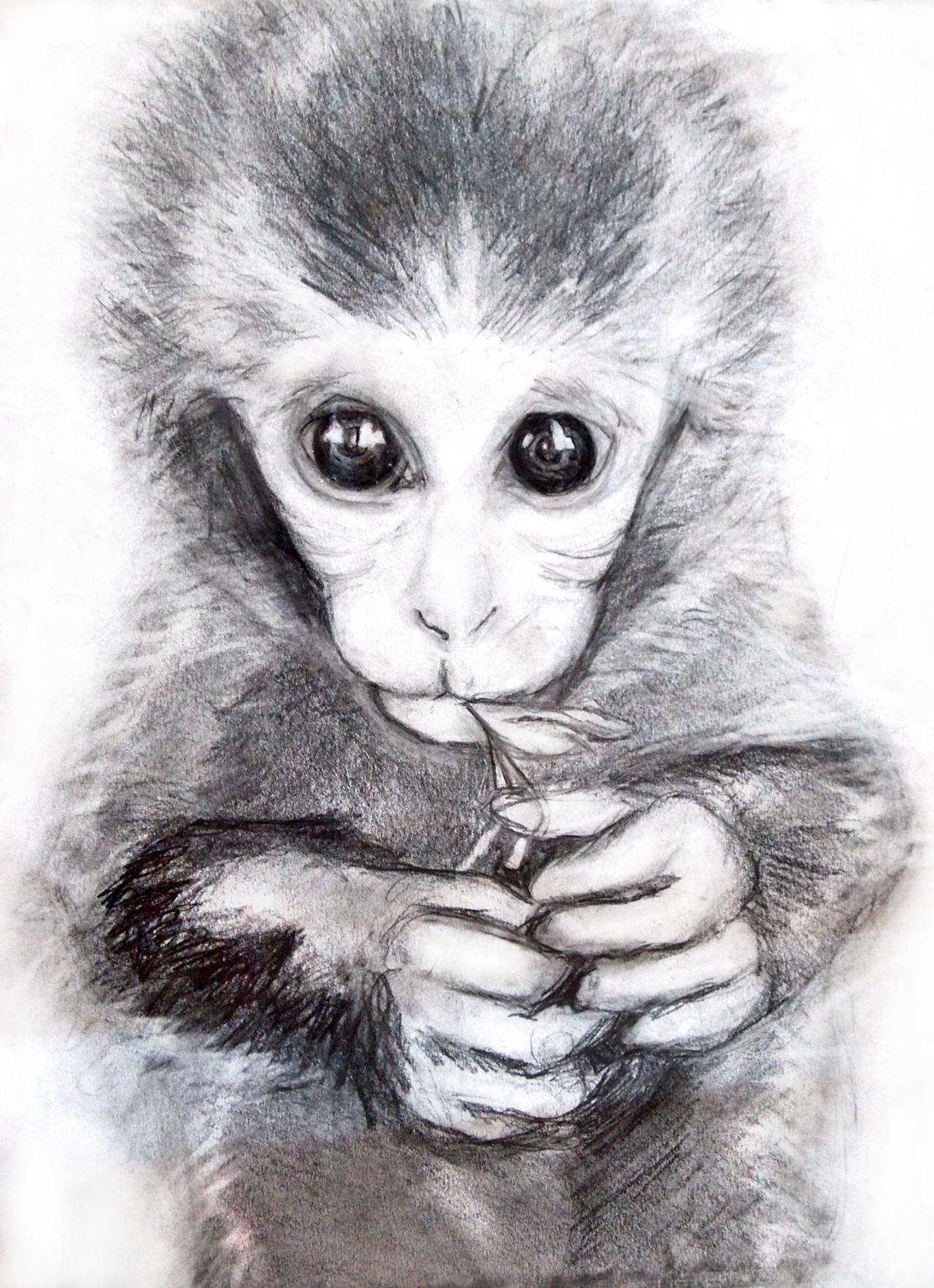 Monkeys drawings - photo#7
