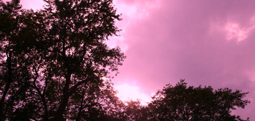 To see life in pink by Hypholia