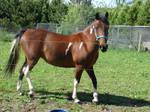 Horse Stock Three