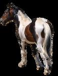 Free Use Pre-Cut Horse Stock #1