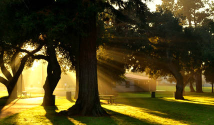 Sun rays by ramblepaw