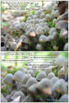 Life of Brian-mushroom