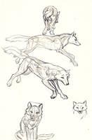 Wolf anatomy by KekPafrany