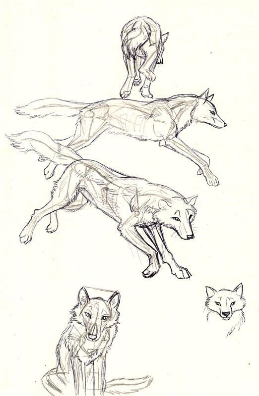 Wolf Anatomy Diagram